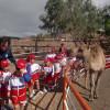 (Español) Lanzarote a caballo.